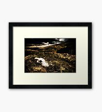 The Skull Is Natures Sculpture Framed Print