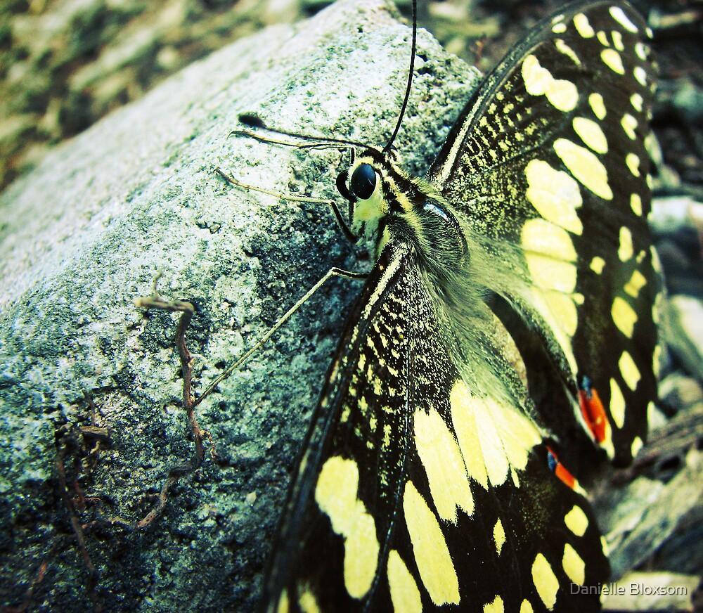 Yesterday a butterfly by Danielle Bloxsom