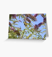 butter flys Greeting Card