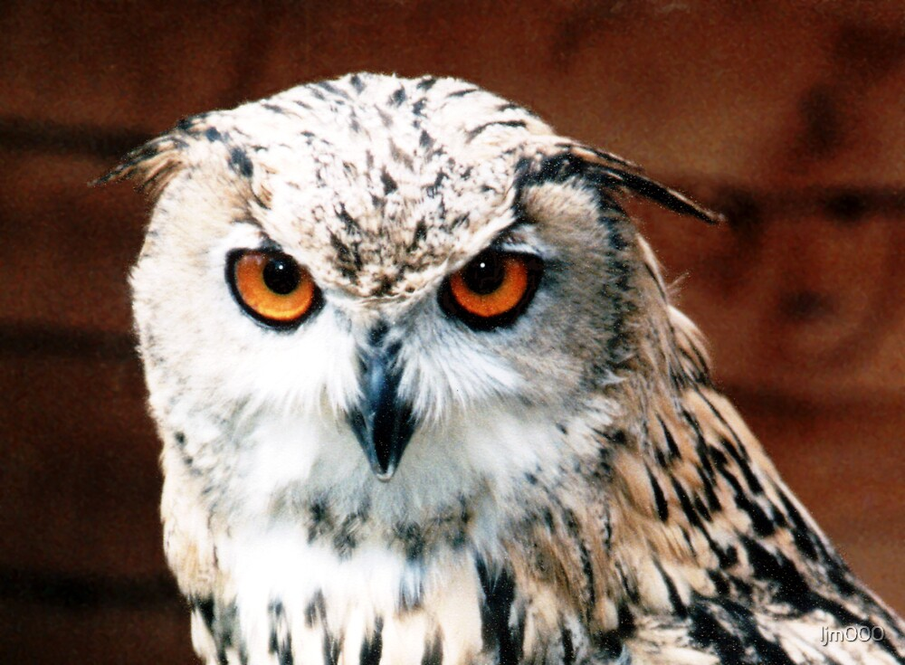 Eagle Owl Stare by ljm000