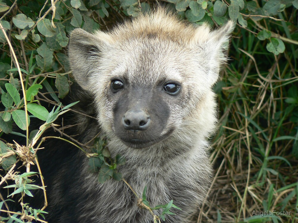 baby hyena by AngelaFoster