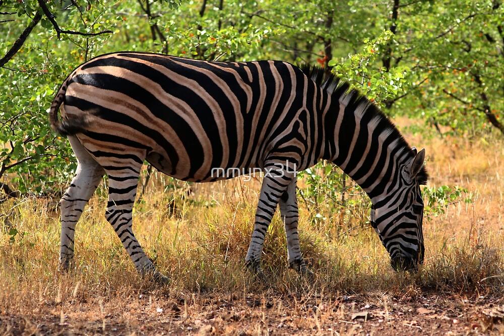 Zebra by mmynx34