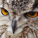 Eagle Owl Close Up by Paulychilds