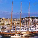 Palma Harbour by Tom Gomez