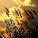 """""""Summer Afternoon"""" by Jaime Hernandez"""