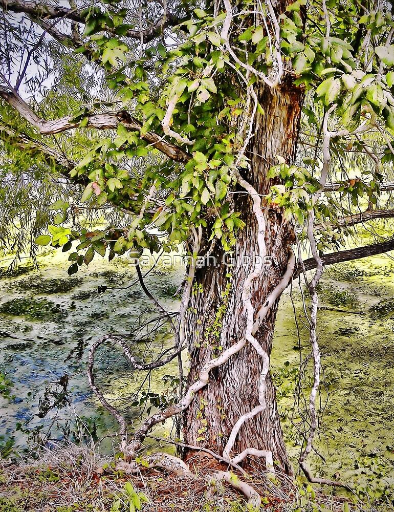 Tree by Savannah Gibbs