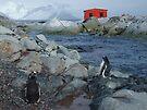 Port Circumcision, Antarctica by John Douglas