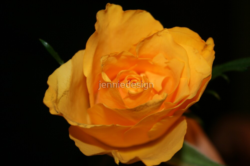 yellow rose by jenniedesign