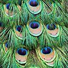 Pfauenfedern von Peggy Collins