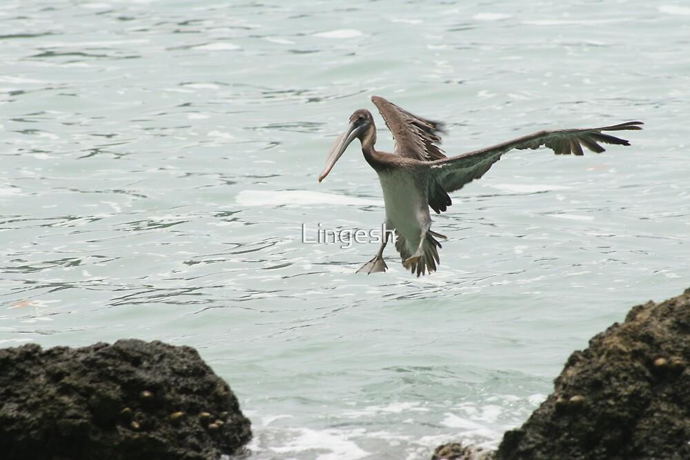 Flying bird by Lingesh