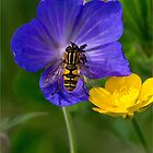 Cranesbill, buttercup and Hoverfly by Violaman