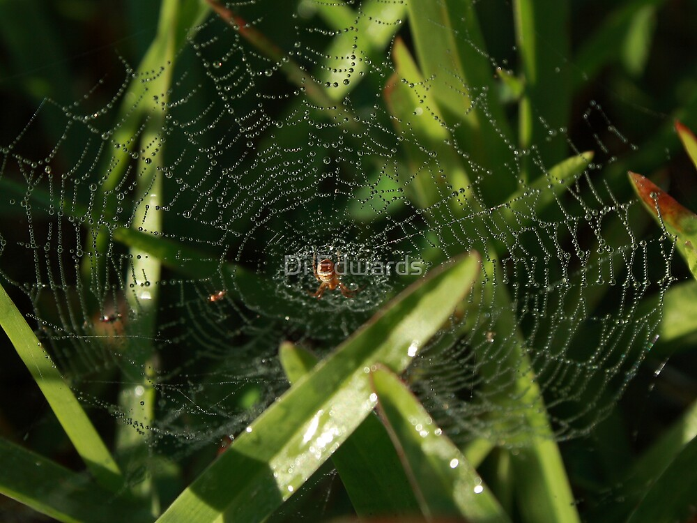 Web of Light by Di Edwards