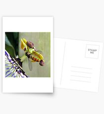 Hoverfly on a Passionflower Postcards