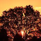 Sunset In Albert Park , Melbourne by Ben de Putron