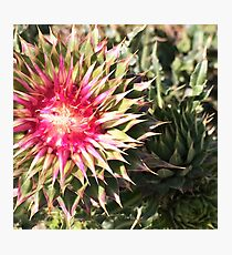 Summertime Flower Photographic Print