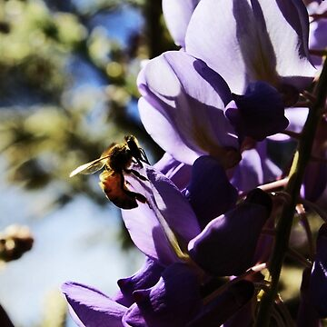 The Bee On A Wisteria by Evita