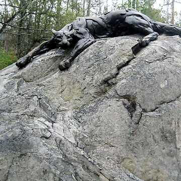 Cat On a Big Rock by GQ1NYC