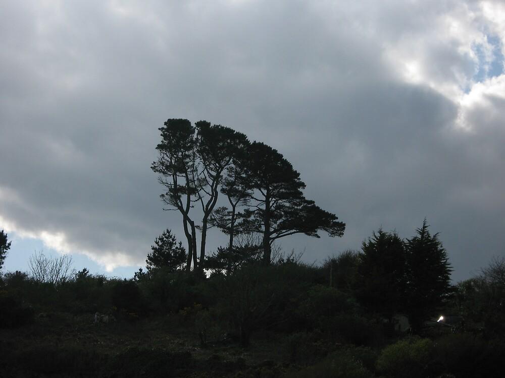 Stormy Tree by gemtrem