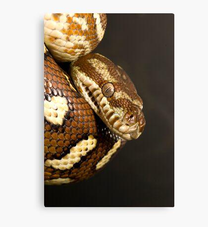 Bredl's Python Canvas Print