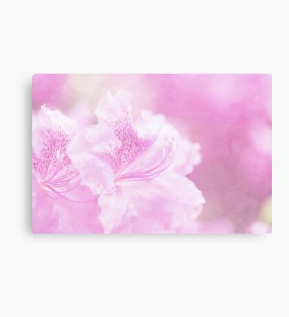 Soft and Lovely Pink Rhododendrons Canvas Print