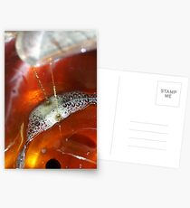 Drops of Maple Postcards
