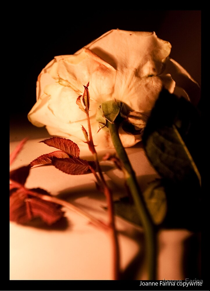 Rose by Joanne  Farina