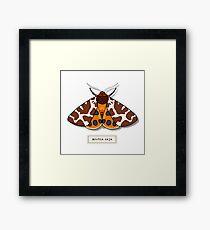 Moth02 Framed Print