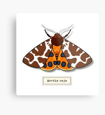 Moth02 Metal Print