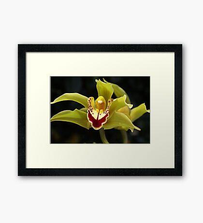 Wonderful Green Orchid Framed Print