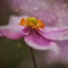 Pink Sparkles by yolanda