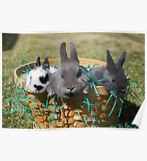 Easter bunnies002 Poster