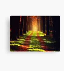Forest Track Canvas Print
