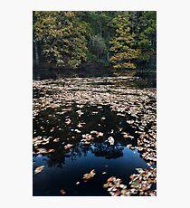 mill pond, crathes Photographic Print