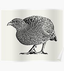 Natal Spurfowl | African Wildlife Poster