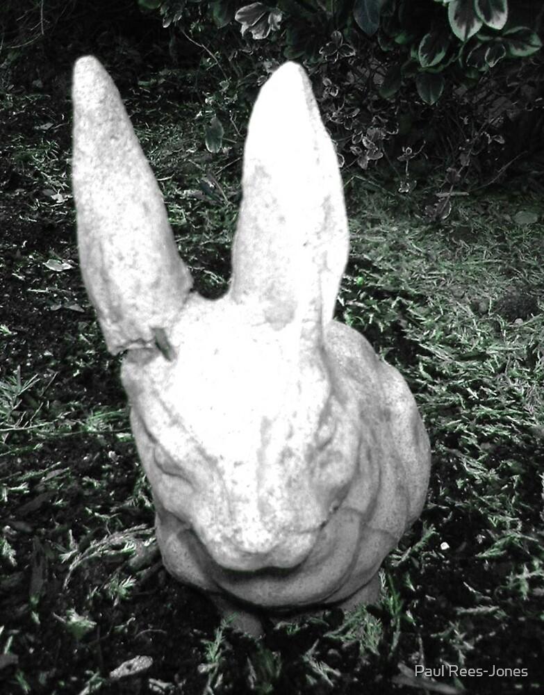 Broken Bunny by Paul Rees-Jones