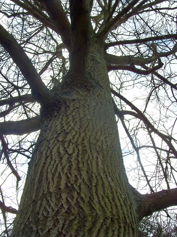 Tree by Zoe Chesterman
