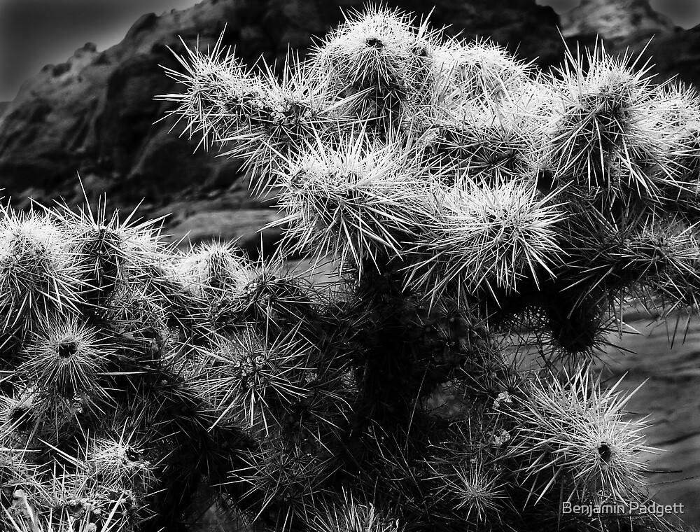 Cholla Cactus No. 1 by Benjamin Padgett