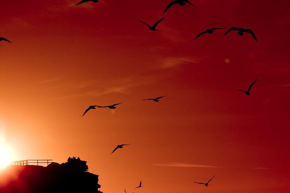 Flock by Belinda Fraser