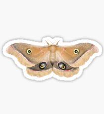 Giant Silk Moth Illustration Sticker