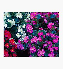 Mix color flowers Photographic Print