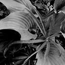 Snail & Garden by Anthony DiMichele