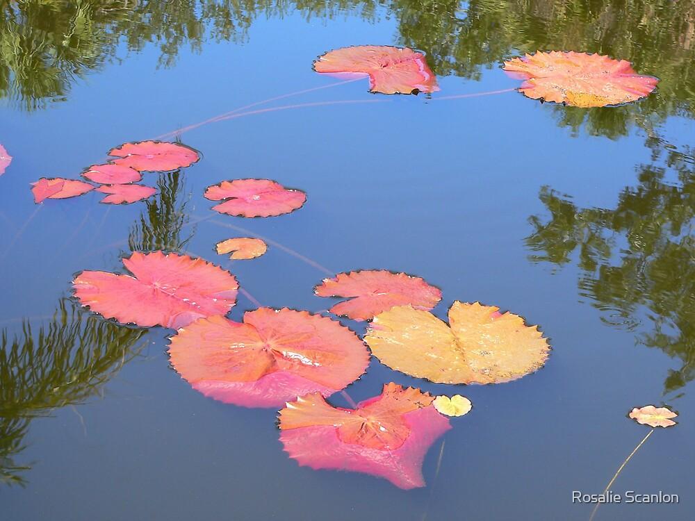 Minus the Lilys by Rosalie Scanlon