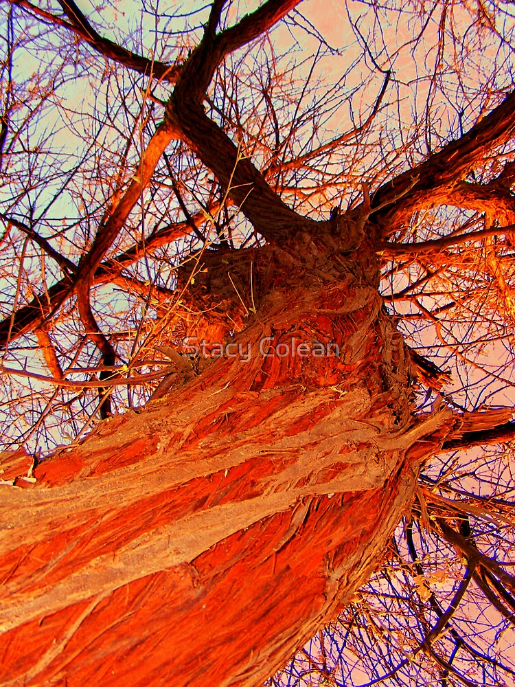 Texture of the Tree by Stacy Colean