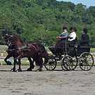 Team of Friesians - historic means of transportation and status by Bine