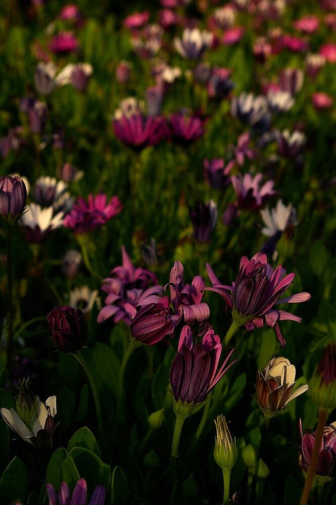 Garden Flower's by Chris Popa