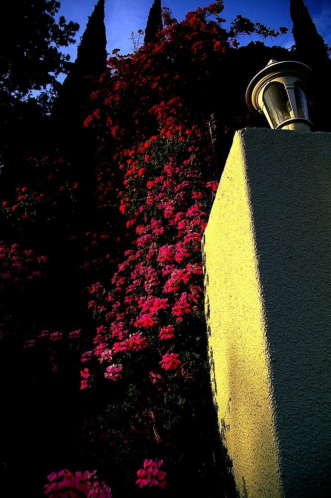 Flower Line by Chris Popa