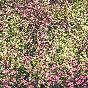 Wildflowers by ZedEx