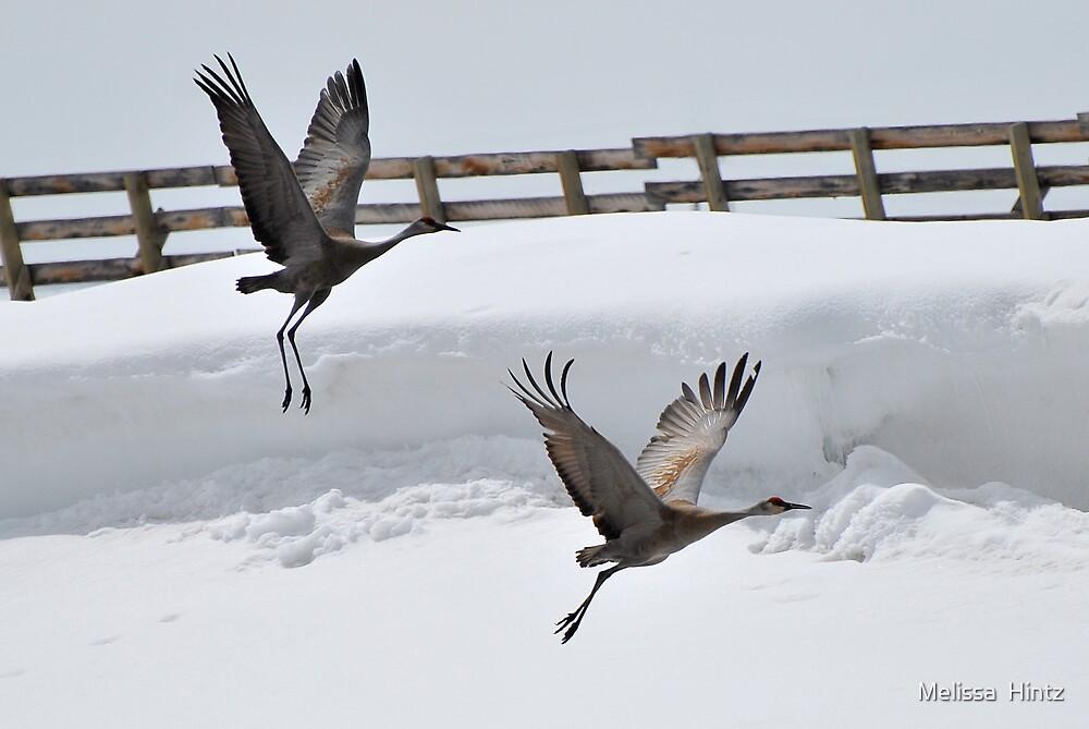 Cranes In Flight ~1~ by Melissa  Hintz