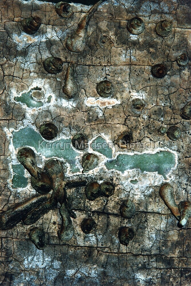 Surfaces,Textures and Patterns (Palm Tree Trunk 1)  by Kerryn Madsen-Pietsch
