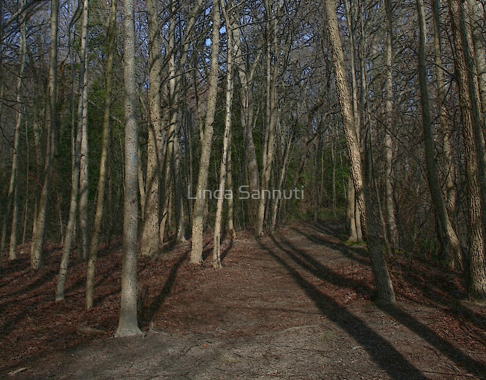 woods path by Linda Sannuti